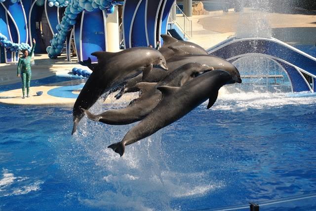 Dolphins @ SeaWorld Orlando