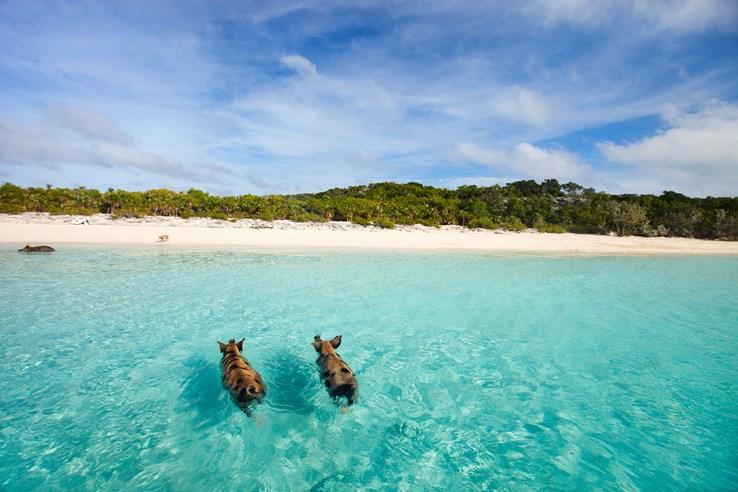 Exuma Beach, Bahamas.