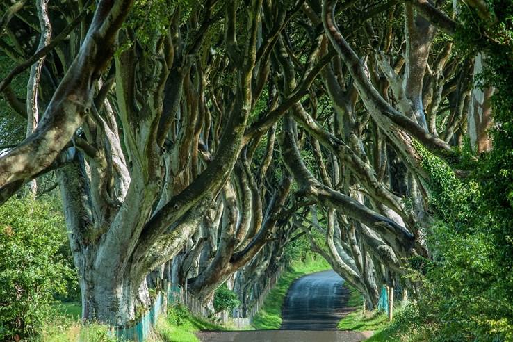 Dark Hedges - County Antrim - Irlenad
