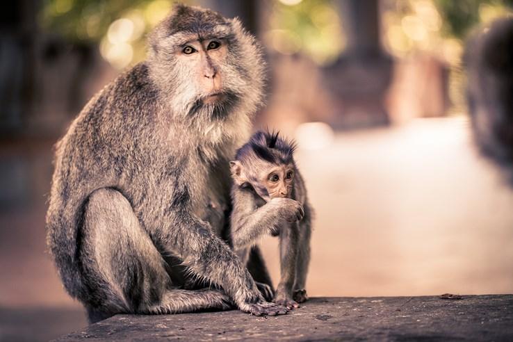 Bali Sacred Monkey Forest