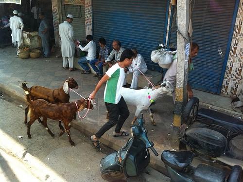Goats through the streets of Dehli