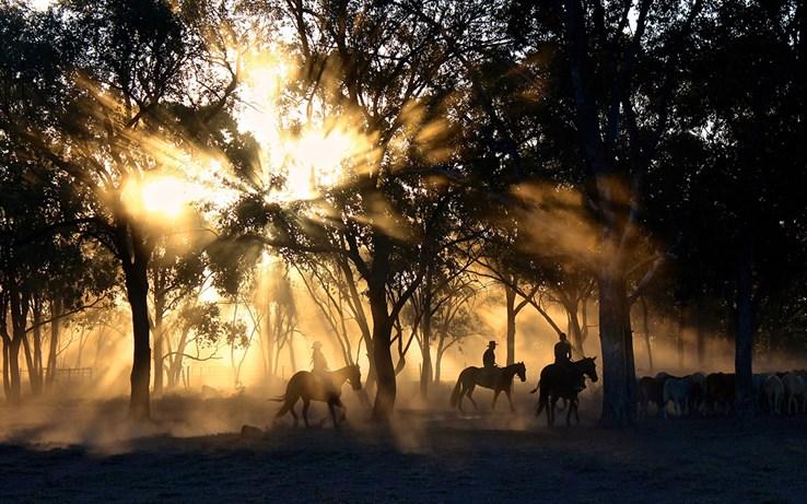 Texas Cowboys | Texas Ranch