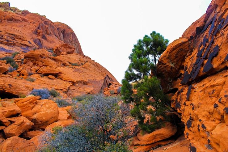 Red Rock Canyon, Las Vegas