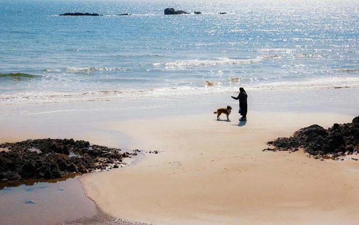 Dog Friendly Beaches