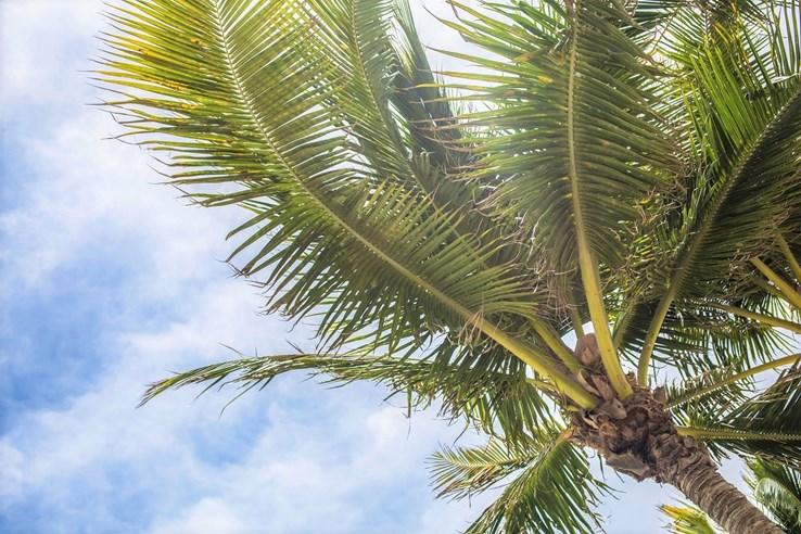 St Pete's Beach Palm Trees | Florida