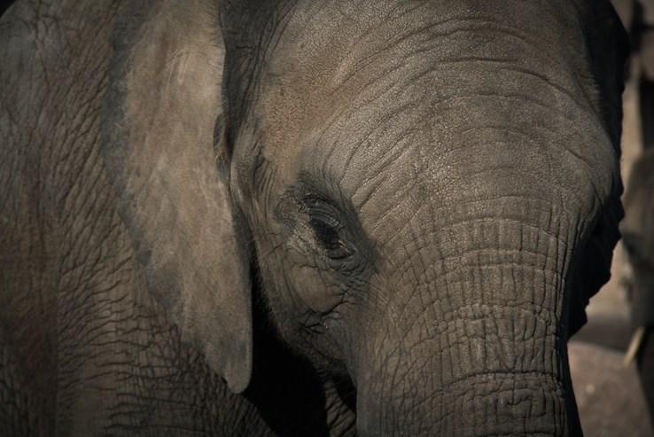 Elephant Safari Park, Bali